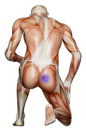 anatomia muscular - piriforme